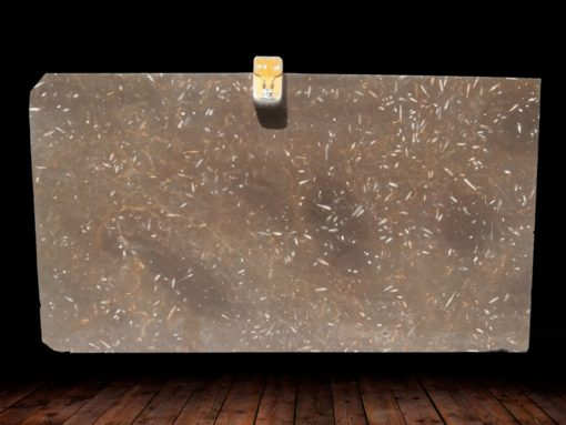 JURASSIC BROWN POLISHED MARBLE