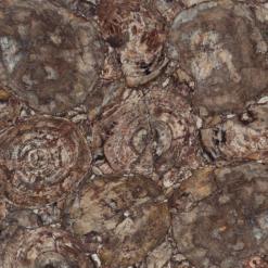 Albero Caesarstone Quartz