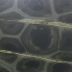 Tartaruga Quartzite Full Slab